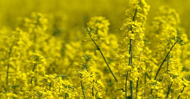 Metroxpress: Skal man stege i smør, rapsolie, olivenolie eller solsikkeolie?